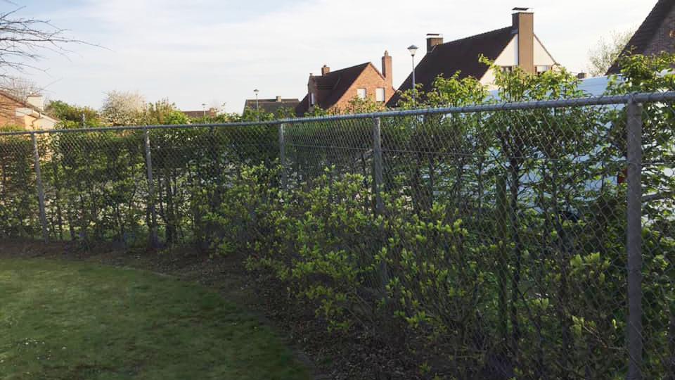 tuinaanleg aanplanten struiken