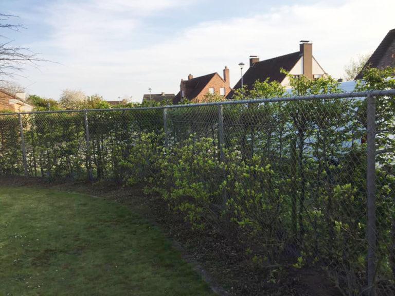 aanplanten struiken