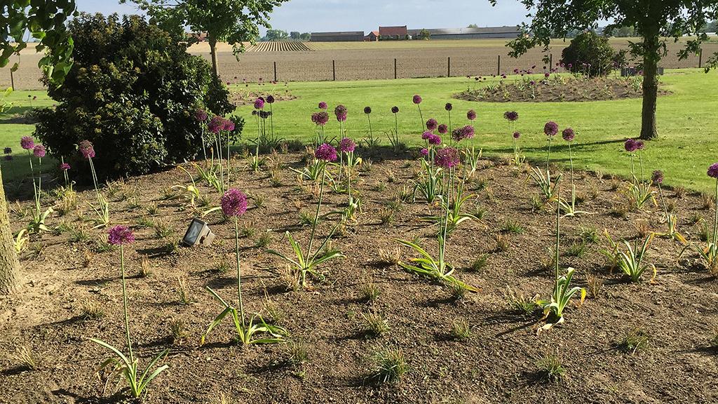 aanplanten siergras
